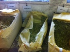 A motherload of hops at Theakston brewery